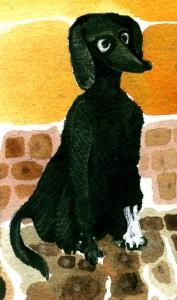 cane pici 3